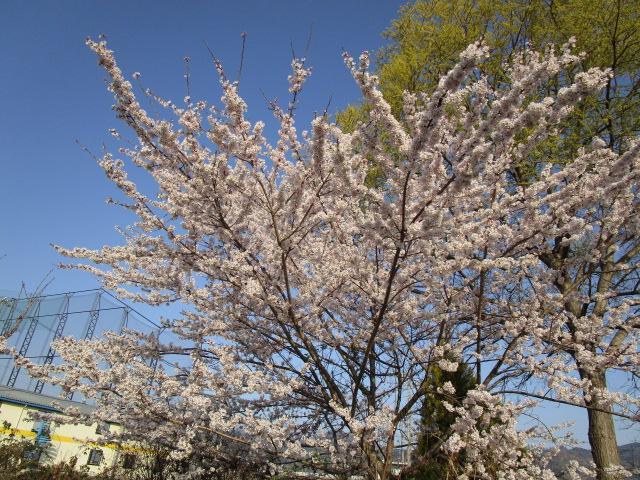 春のおたのしみ